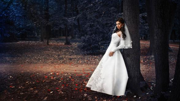 Обои Невеста стоит у дерева в осеннем парке