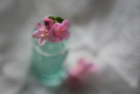 Обои Баночка с розовыми цветами