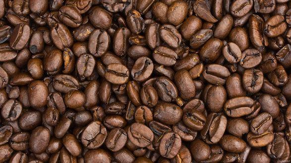 Обои Фон из кофейных зерен