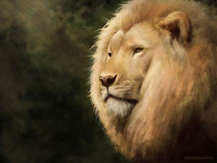 Обои Рисованный лев в профиль, by PaulinaKlime