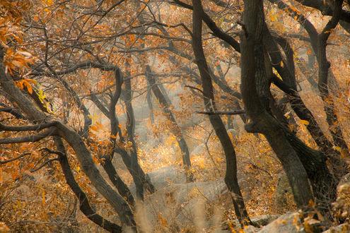 Обои Осенний лес с извилистыми деревьями