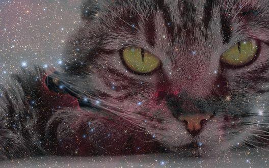 Обои Кошка лежит на полу и смотрит гипнотизирующим взглядом