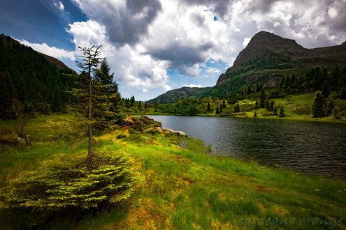 Обои Дерево на зеленеющей траве на берегу озера, фотограф sardegna orange