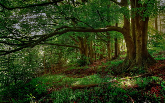 Обои Зеленый лес на склоне