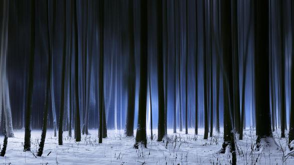Обои Зимний темный лес, фотограф Roman Alyabev