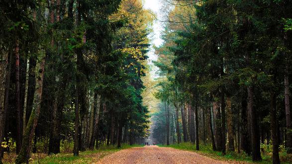 Обои Дорога в лесу, фотограф Роман Алябьев