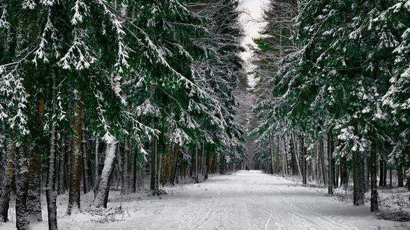 Обои Дорога в зимнем лесу, фотограф Роман Алябьев