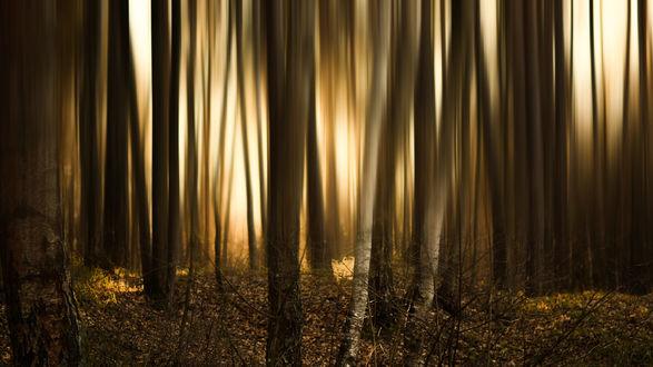 Обои Закат в лесу, фотограф Роман Алябьев
