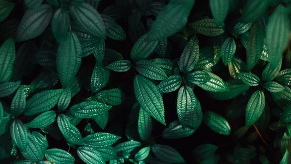 Обои Растение с зелеными листьями, фотограф Роман Алябьев