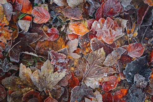 Обои Замерзшие листья лежат на земле, фотограф Daniel Laan