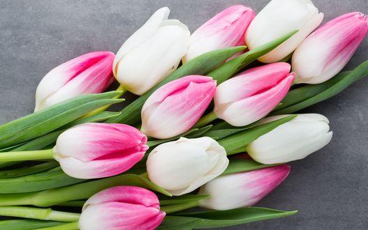Обои Белые и розовые тюльпаны
