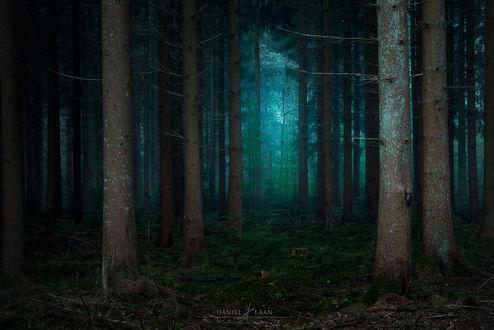 Обои Темный лес в голубых оттенках, фотограф Daniel Laan