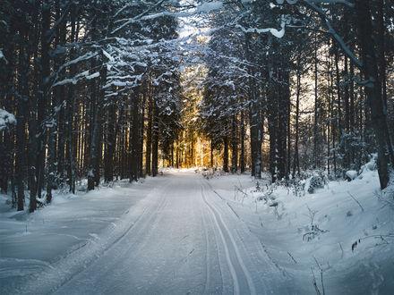 Обои Дорога в зимнем лесу