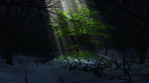 Обои Дерево с зеленой листвой под светом лучей в зимнем ночном лесу
