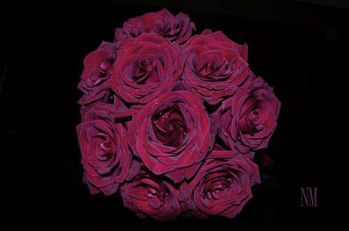 Обои Букет бордовых роз с каплями роз на черном фоне, фотограф N. M