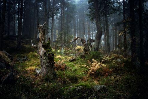 Обои Темный осенний лес в легком тумане