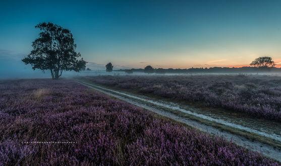 Обои Дорога между лавандовыми полями перед рассветом, фотограф Chris Hornung