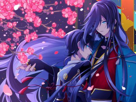 Обои Два парня под цветущей сакурой - персонажи из игры Touken Ranbu / Танец мечей