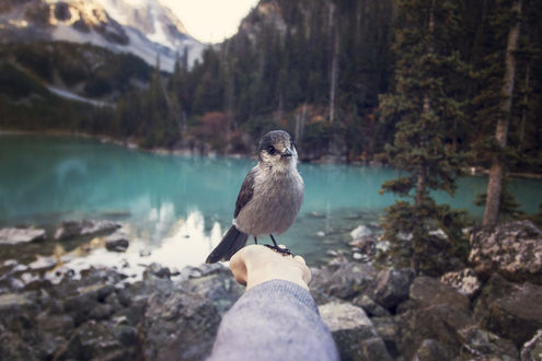 Обои Птичка на руке девушки, которую она держит на фоне природы, фотограф Martina Gebarovska / Мартина Гебаровска