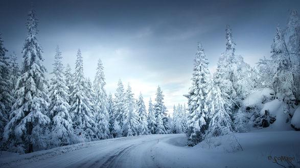 Обои Дорога через зимний лес, фотограф Sven Olav Vahlenkamp