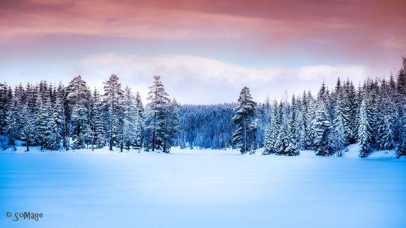 Обои Сосновый зимний лес под облачным небом, фотограф Sven Olav Vahlenkamp