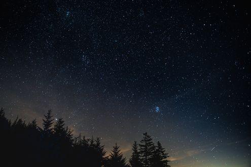 Обои Звездное ночное небо над верхушками деревьями