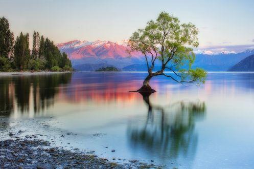 Обои Одинокое дерево на фоне гор, New Zealand / Новая Зеландия, южный остров, озеро Wanaka / Уанака, by Сергей Заливин