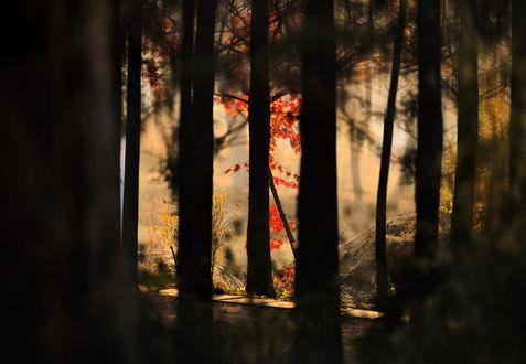 Обои Очаровательный осенний лес, by Stone house