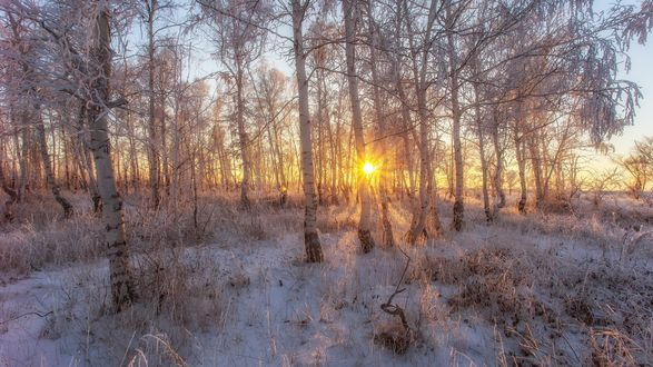 Обои Солнце светит сквозь покрытую инеем березовую рощу, фотограф Сагайдак Павел