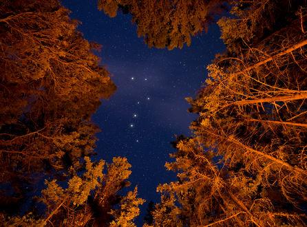 Обои Ночной вид сквозь деревья на созвездие Большой медведицы