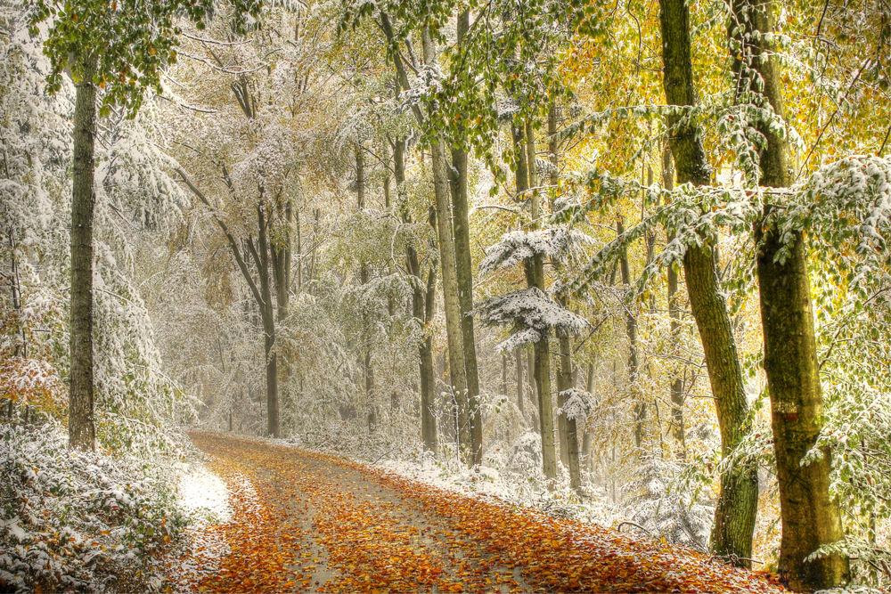 Обои для рабочего стола Дорога с опавшей осенней листвой в припорошенном снегом лесу, фотограф Carmen Neumeier