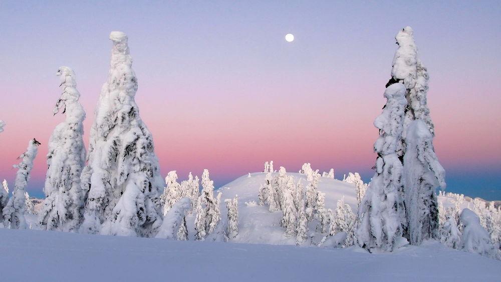 Обои для рабочего стола Заснеженные деревья на холмах на фоне вечернего неба, фотограф Kevin McNeal