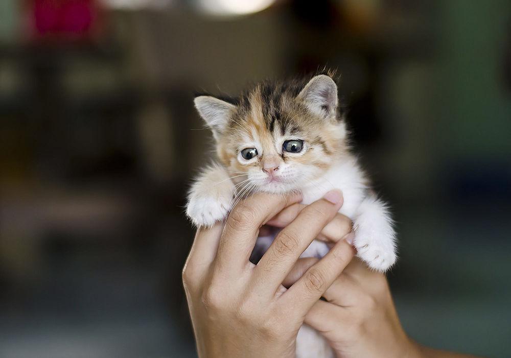 Котенок на ручках картинки