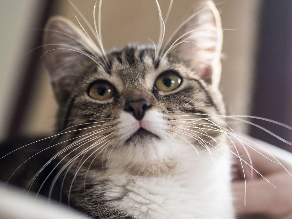 или картинки котят которые смотрят вверх городе существует свыше