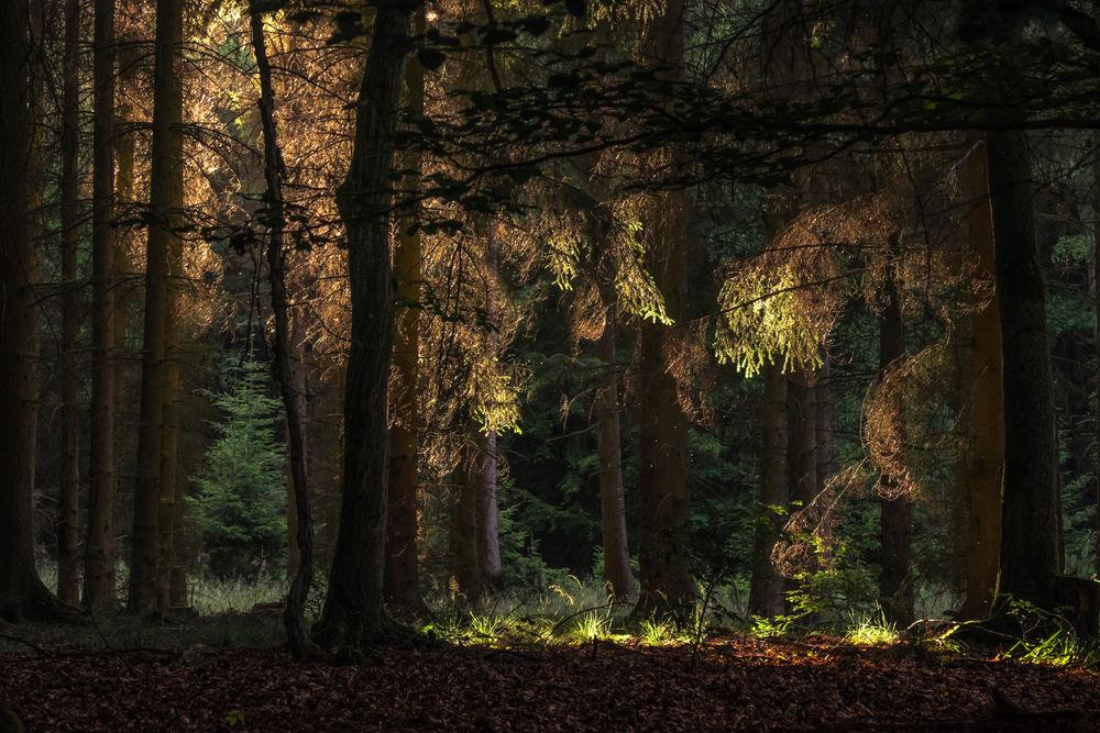 марс картинки сквозь лесную чащу творога треугольники