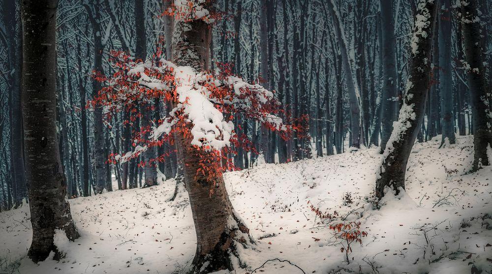 Обои для рабочего стола Первый выпавший снег в лесу, фотограф Otto Gal