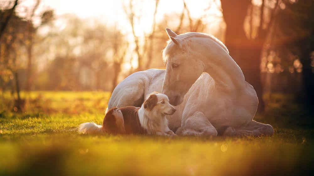 Обои для рабочего стола Белый конь и собака на поляне, фотограф Julia Poker