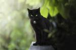 Обои Черный кот с зелеными глазами, by Audrey Bellot