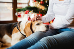 Обои Девушка сидит с собакой у новогодней елки, фотограф Jozef Polc