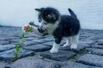 Обои Котенок трогает лапкой цветок, by S0n0ra