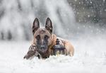 Обои Пес с совой лежит на снегу рядом с фонарем, фотограф Tanja Brandt