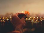 Обои В руке человека цветок, by luizclas