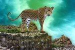 Обои Леопард на скале, на фоне неба, by kalhh