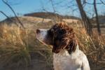 Обои Пес стоит на фоне природы, фотограф Phila