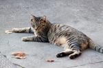 Обои Серая в полоску кошка лежит на асфальте, by Yoko Nekonomania