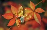 Обои Цифровая бабочка на красных листьях, by Gerd Altmann