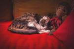 Обои Пушистая кошка лежит на диване рядом с игрушечной обезьяной, фотограф Clo Dallas