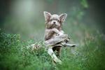 Обои Милый щенок стоит возле коряги в траве, фотограф Светлана Писарева