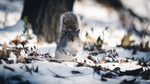 Обои Белочка сидит на снегу, фотограф Pierre Lidar