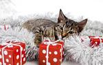 Обои Полосатая кошка лежит на мишуре возле подарков в виде кубиков